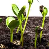 Срок посева семян на рассаду очень важен