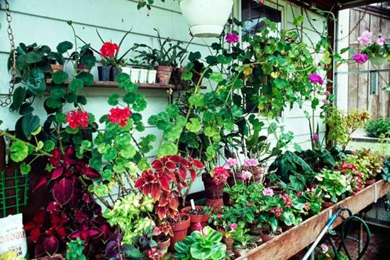 В помещениях, где растут цветы надо поддерживать оптимальный тепловой режим