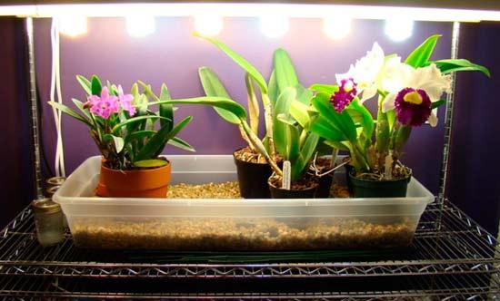 Дополнительное освещение для орхидей