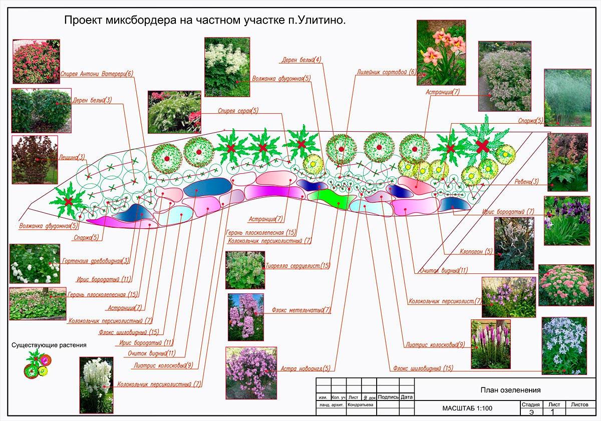 Многолетние цветы схема посадки