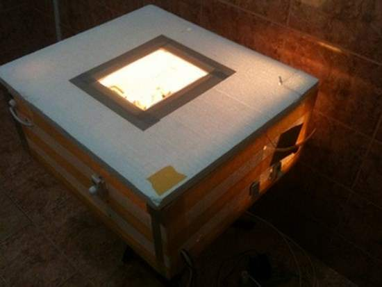 Домашний инкубатор из пенопласта