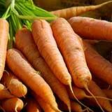 Выбор сорта моркови - трудная задача