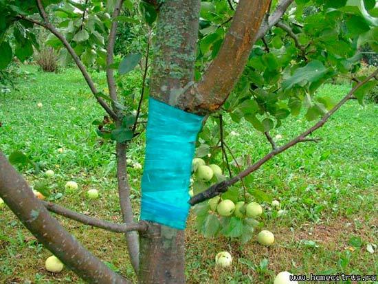 Лечение ран на деревьях