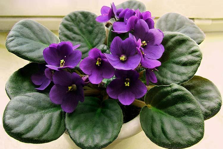 Цветы фиалки своими руками фото 989