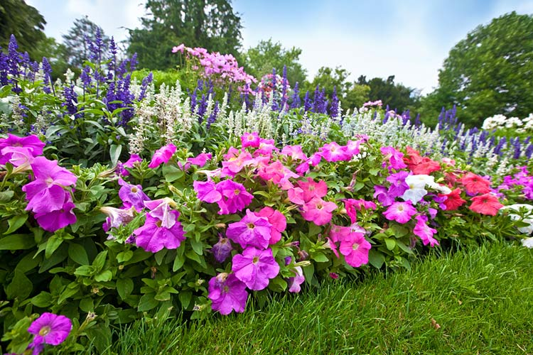 Какие цветы нужно сажать весной фото