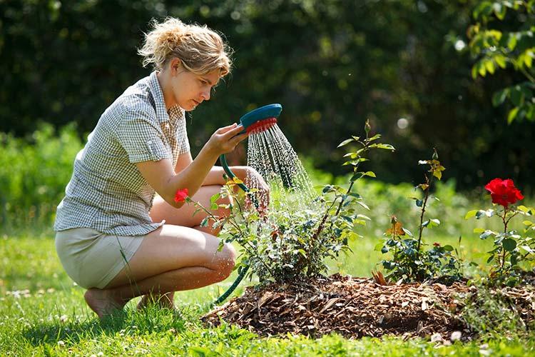 Бархатцы (Тагетес) — съедобные цветы на все случаи жизни
