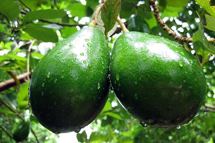 Выращиваем экзотические растения 88