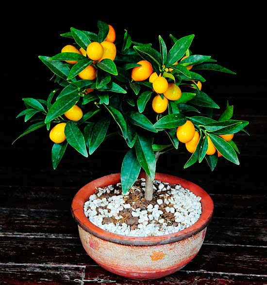 Как выращивать экзотические растения в домашних условиях?
