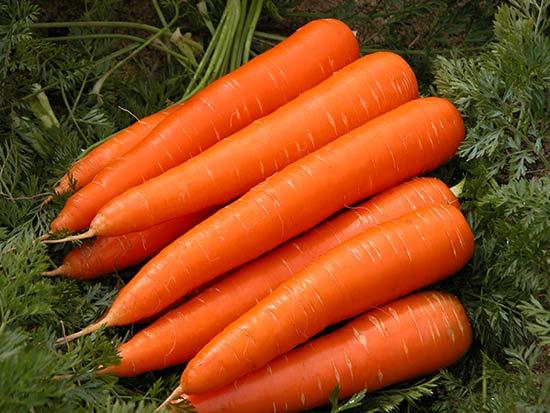 Здоровые корнеплоды моркови