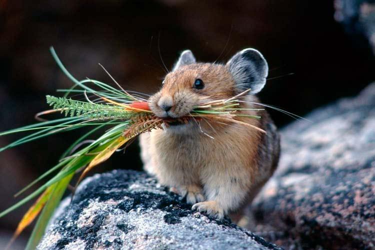 Как бороться с мышами на огороде