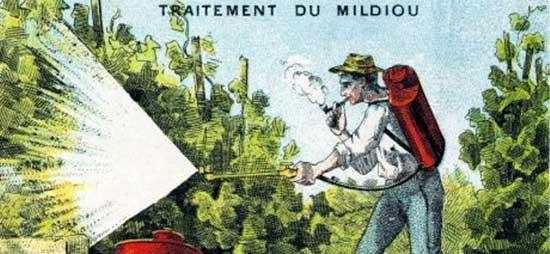 Изначально бордоская смесь применялась при борьбе с милдью, болезнью винограда