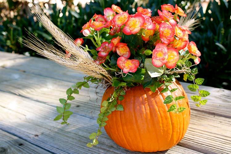 https://good-tips.pro/images/Articles/resized/fall-flowers.jpg