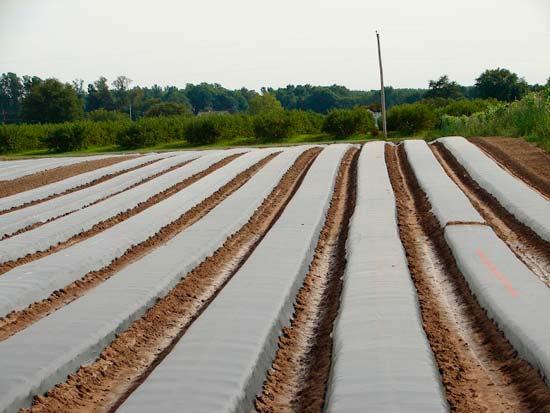 Участок земли подготовленный под посадку клубники (США)