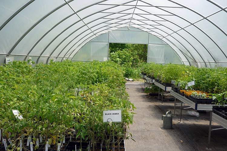 Когда выращивать рассаду в теплице 407