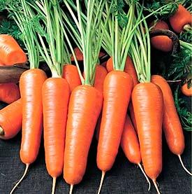 Морковь, сорт Каротель (сортотип Геранда)