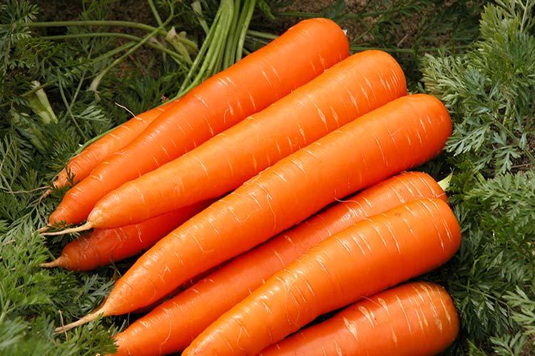Лучшие сорта моркови: обзор и описание характеристик, урожайность