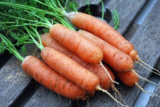 Морковка должна быть крупной и ровной