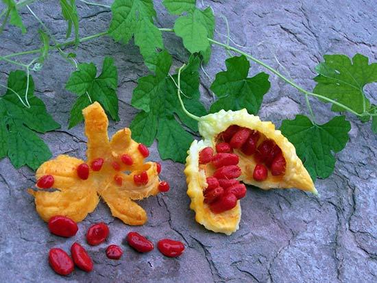 Индийский огурец (Момордика)- лечебные свойства