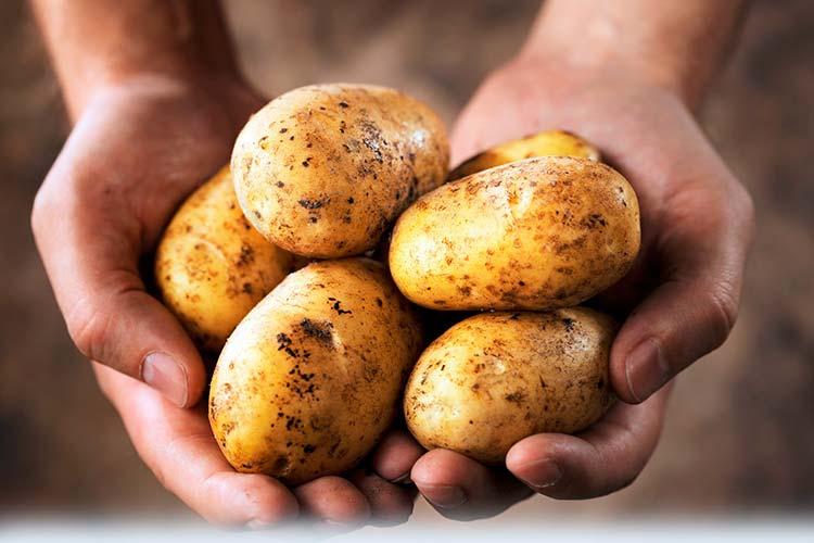 Картинки по запросу клубни картошки