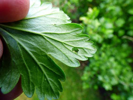 Молодая гусеница на листе