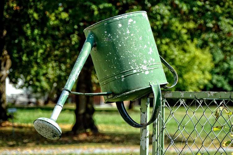Как и когда поливать кипятком смородину весной. Дедовские способы ухода за смородиной весной.