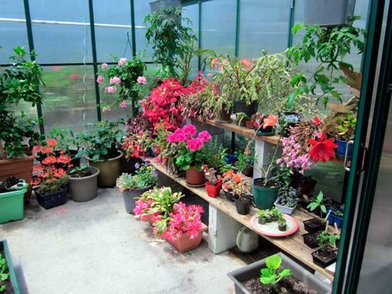 Вода для полива комнатных растений должна быть мягкой
