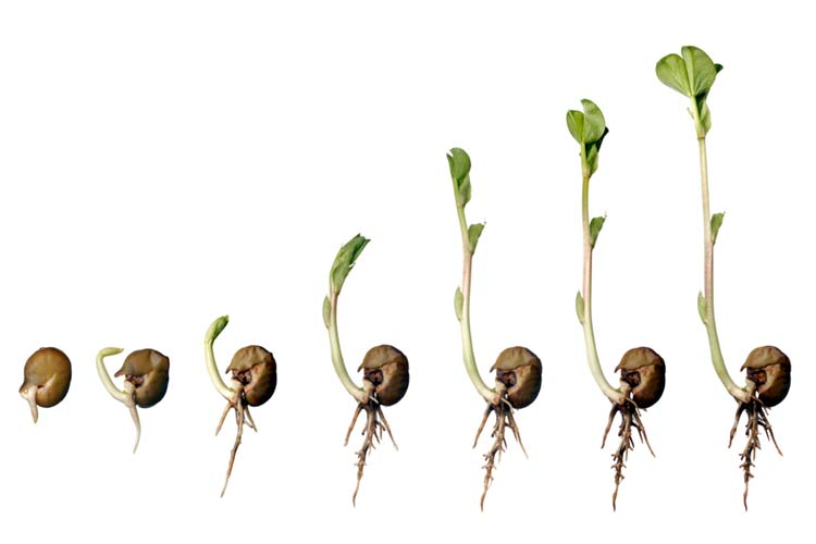 an outline of the macronutrients needed for the growth and germination of plants