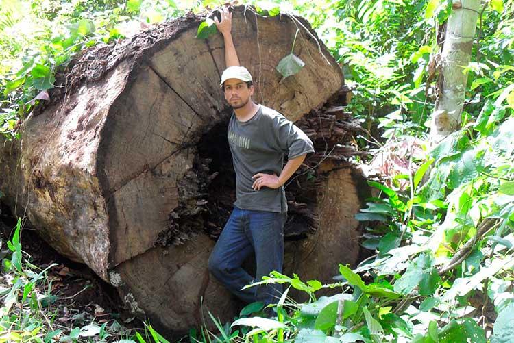 Диаметр ствола бертолетии высокой составляет, в среднем, 2 метра