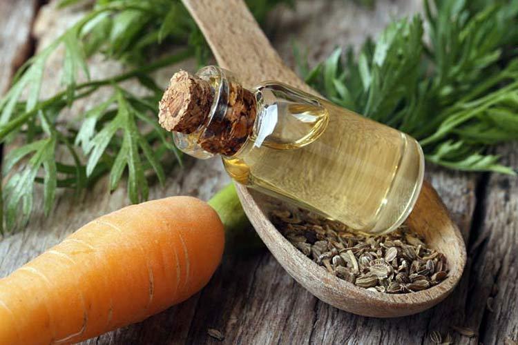 Доктор Морковь лекарственные свойства моркови