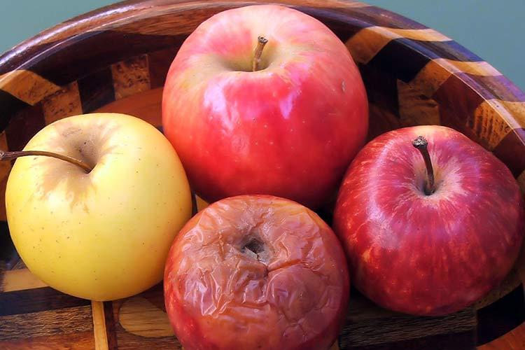 Полезные и опасные свойства яблок