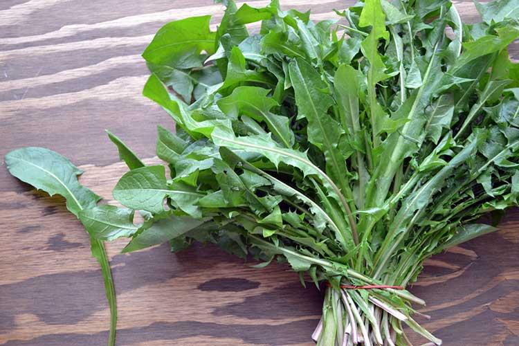 Зелень одуванчика обладает лечебными свойствами
