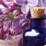 Сирень для лечения сахарного диабета
