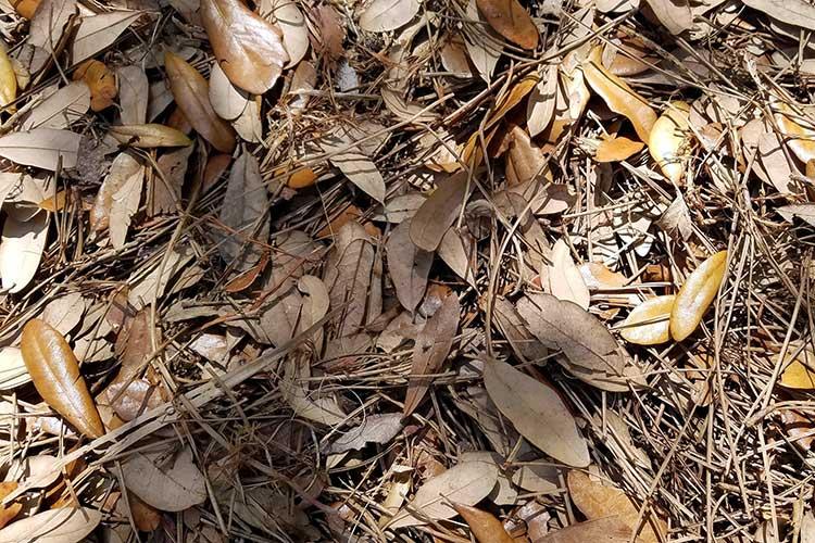 Опавшая листва - хороший материал для мульчирования