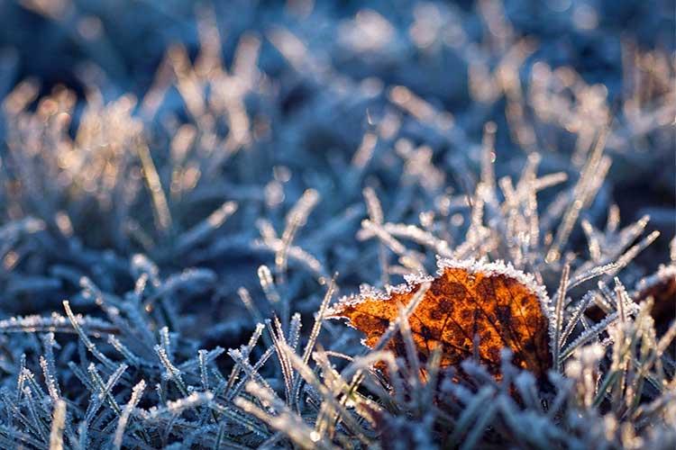 Заморозок на почве. Почву для подзимнего посева готовят заранее, а вот семена высевают когда почва остынет до нуля