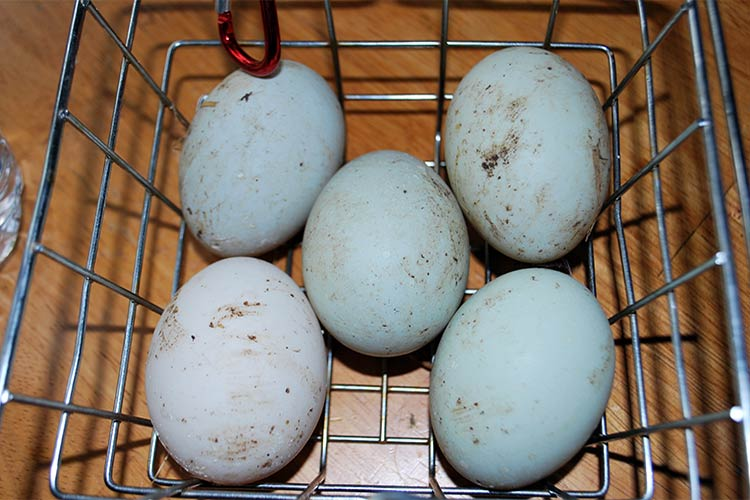 горловой мнет вместе с яйцами